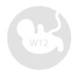 12 tednov nosečnosti